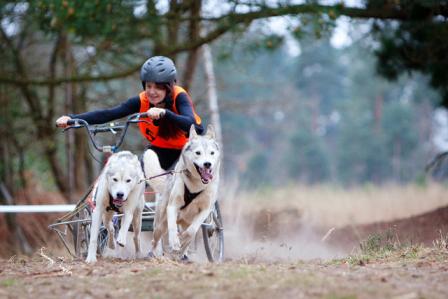 husky sport