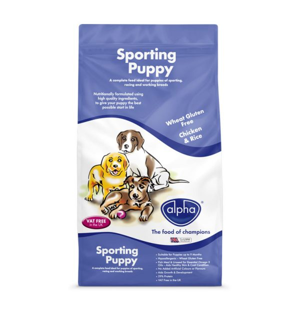 Sporting-puppy-FRONT-ON