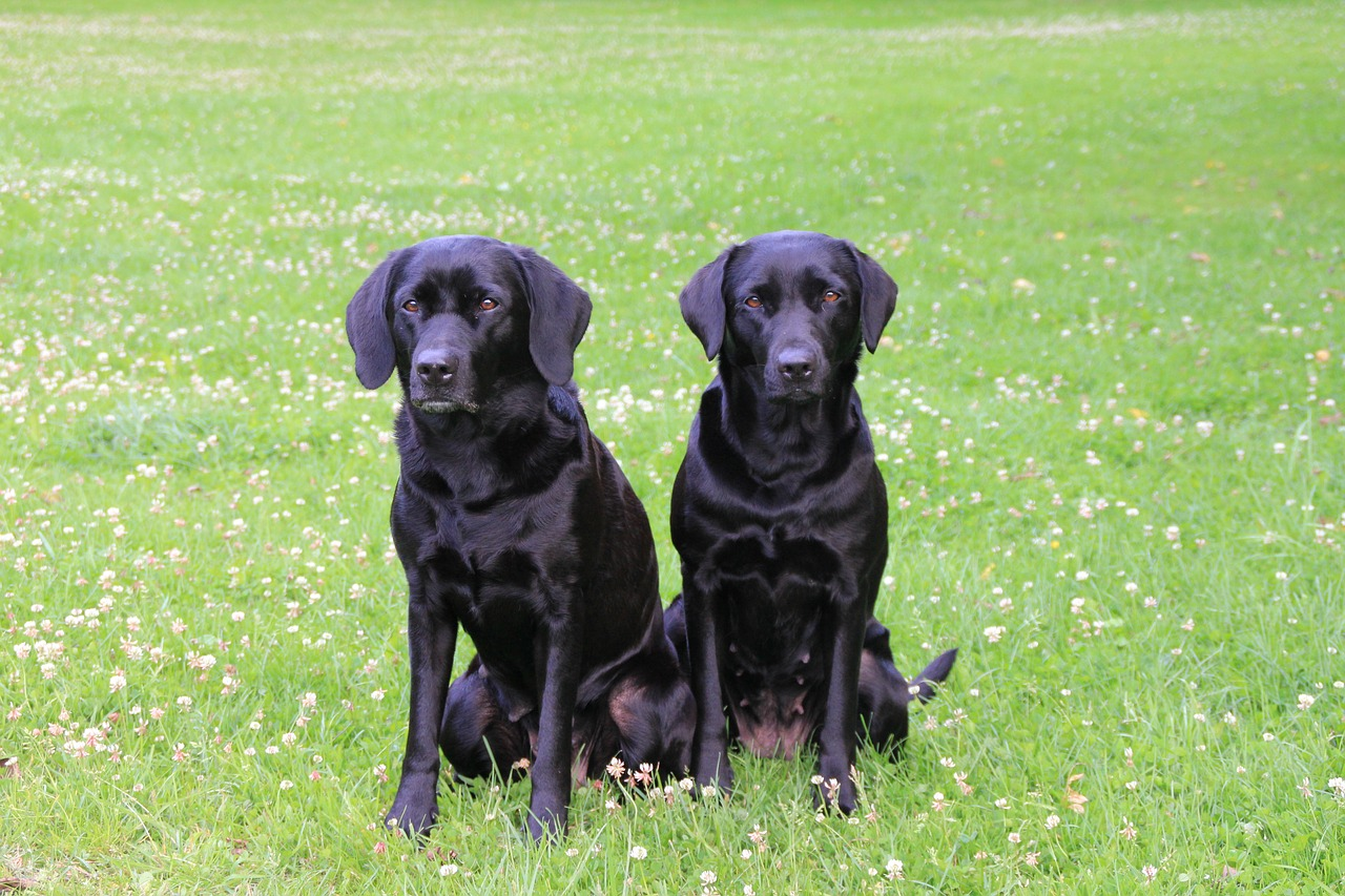 Top tips for training your young gun dog