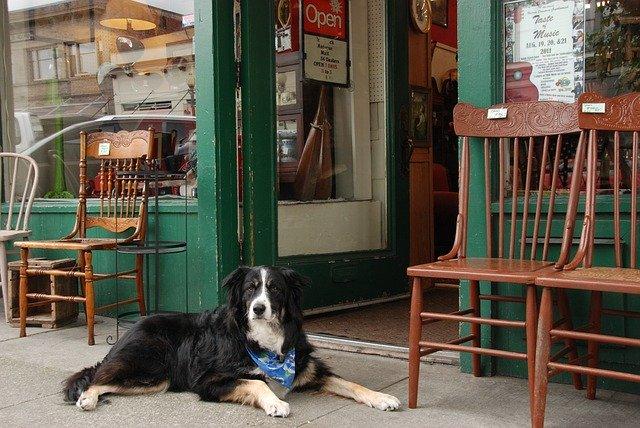 dog sat outside shop