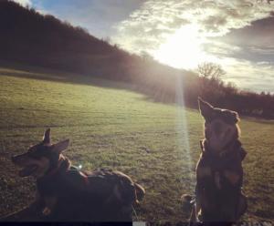 dogs, sun